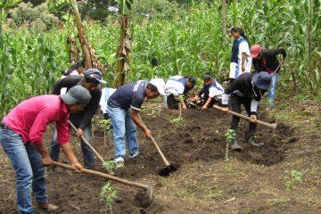 Migrantes Campesinos indígenas de chiapas